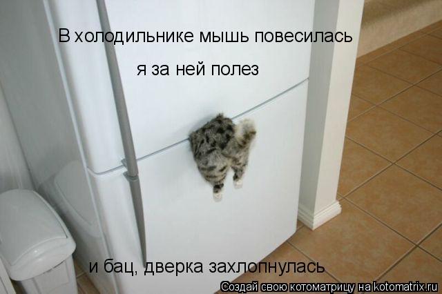 Котоматрица: В холодильнике мышь повесилась я за ней полез и бац, дверка захлопнулась