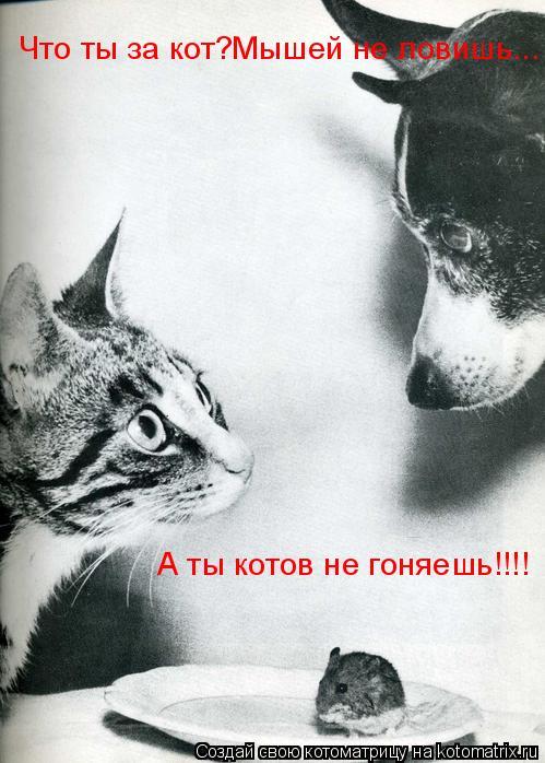 Котоматрица: Что ты за кот?Мышей не ловишь... А ты котов не гоняешь!!!!