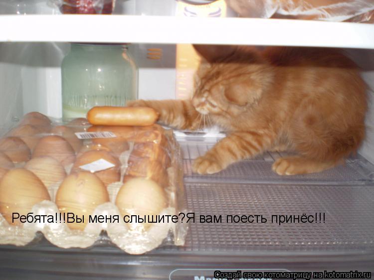 Котоматрица: Ребята!!!Вы меня слышите?Я вам поесть принёс!!!