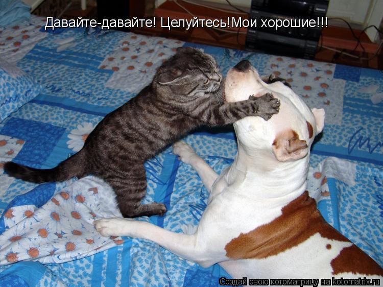 Котоматрица: Давайте-давайте! Целуйтесь!Мои хорошие!!!