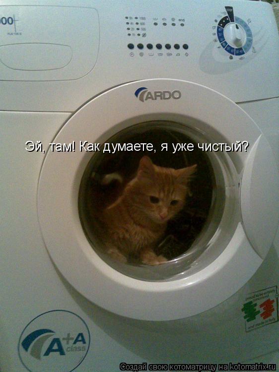 Котоматрица: Эй, там! Как думаете, я уже чистый?
