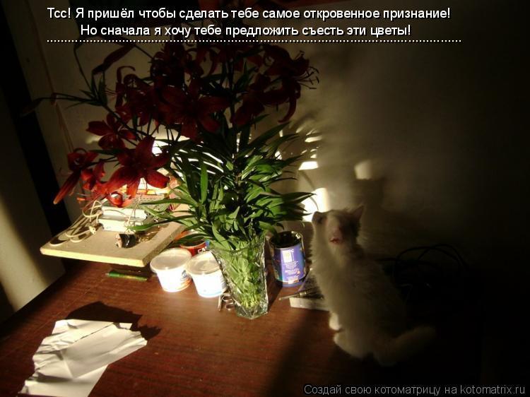 Котоматрица: Тсс! Я пришёл чтобы сделать тебе самое откровенное признание! Но сначала я хочу тебе предложить съесть эти цветы! ....................................