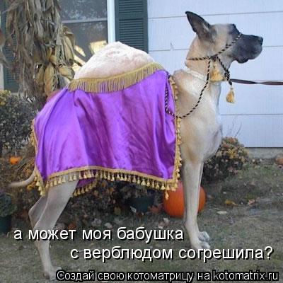 Котоматрица: а может моя бабушка  с верблюдом согрешила?