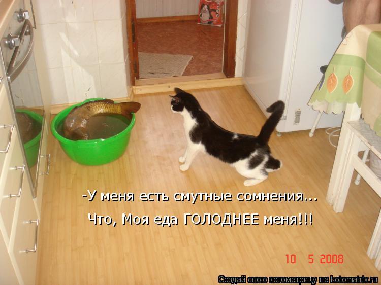 Котоматрица: -У меня есть смутные сомнения... Что, Моя еда ГОЛОДНЕЕ меня!!!