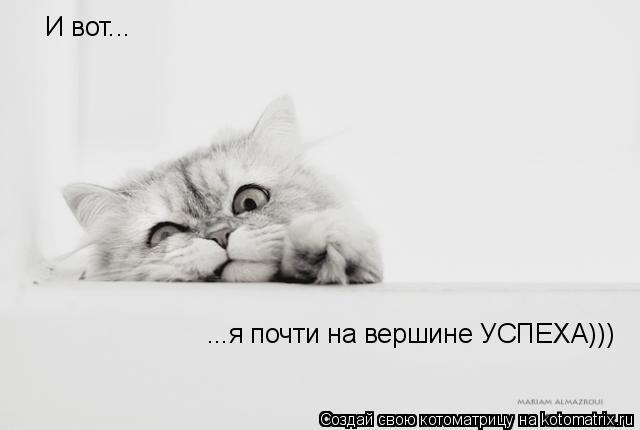 Котоматрица: И вот... ...я почти на вершине УСПЕХА)))