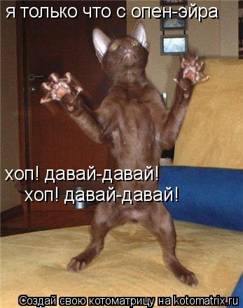 Котоматрица: я только что с опен-эйра хоп! давай-давай! хоп! давай-давай!