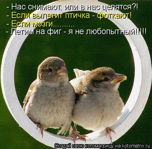 Котоматрица: - Нас снимают, или в нас целятся?! - Если вылетит птичка - фоткают! - Если мозги.......... - Летим на фиг - я не любопытный!!!!!