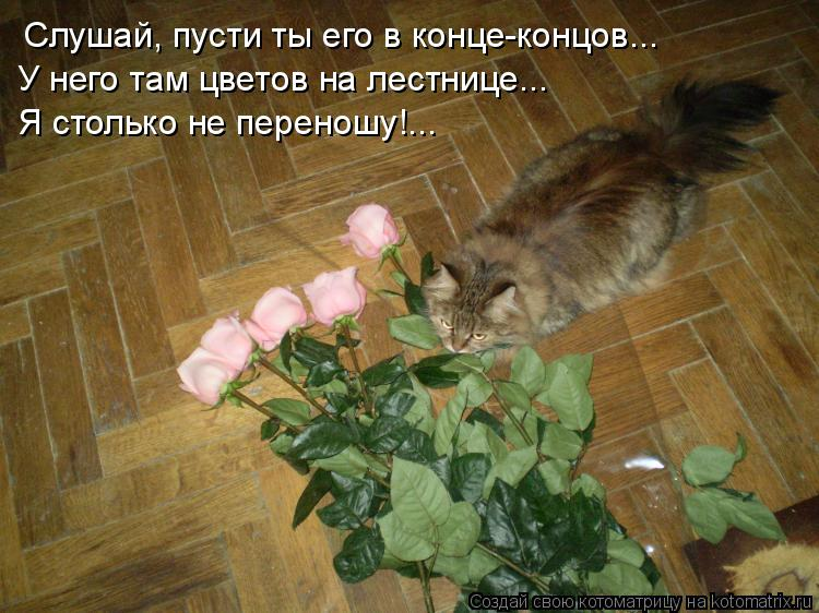 Котоматрица: Слушай, пусти ты его в конце-концов... У него там цветов на лестнице...  Я столько не переношу!...