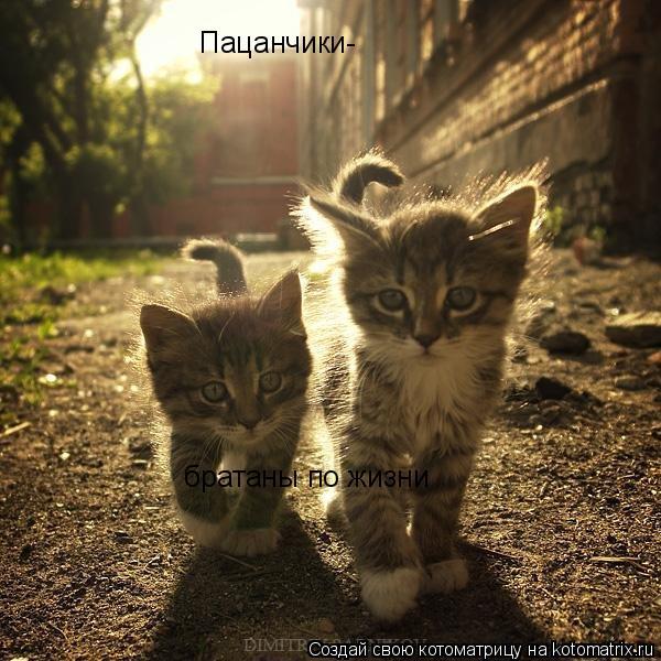 Котоматрица: Пацанчики- братаны по жизни