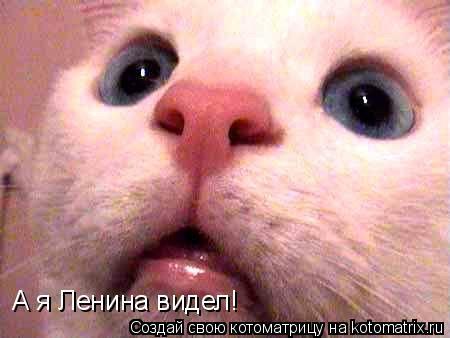 Котоматрица: А я Ленина видел!