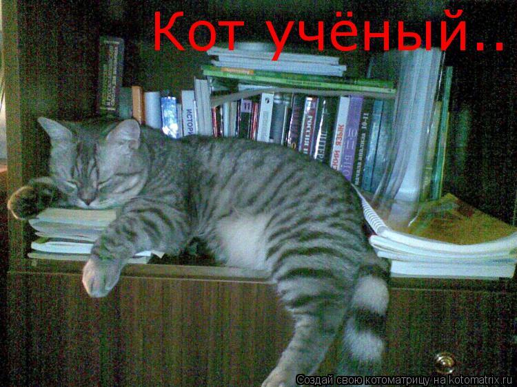 Котоматрица: Кот учёный..