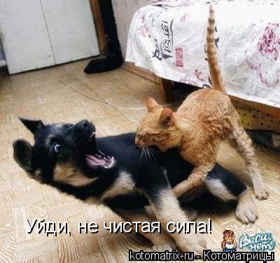 Котоматрица: Уйди, не чистая сила!