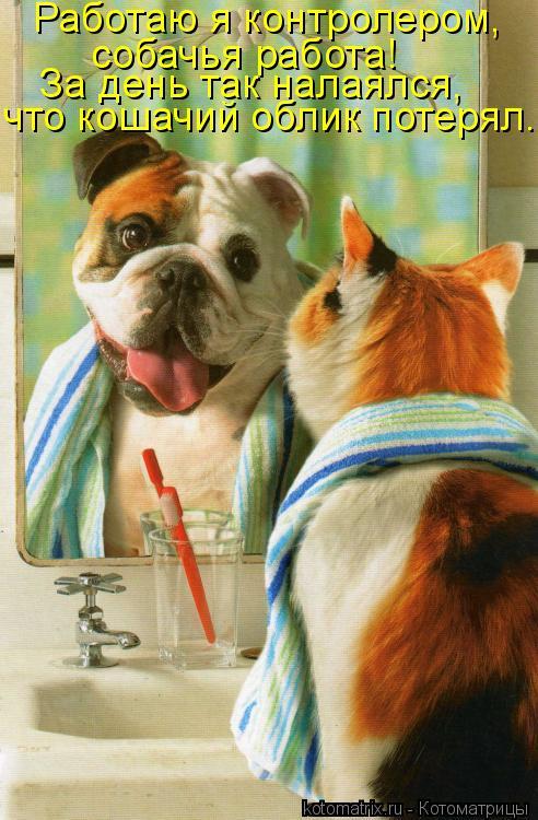 Котоматрица: Работаю я контролером,  собачья работа! За день так налаялся, что кошачий облик потерял...