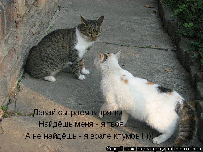 Котоматрица: - Давай сыграем в прятки Найдёшь меня - я твоя! А не найдёшь - я возле клумбы! )))