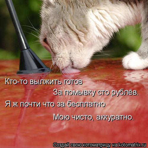 Котоматрица: Кто-то вылжить готов За помывку сто рублёв. Я ж почти что за бесплатно Мою чисто, аккуратно.