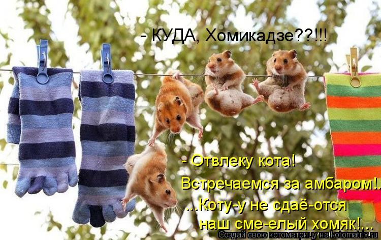 Котоматрица: - Отвлеку кота!   Встречаемся за амбаром!.. ...Коту-у не сдаё-отся  наш сме-елый хомяк!... - КУДА, Хомикадзе??!!!