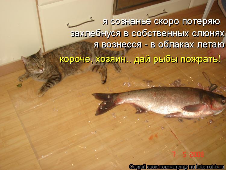 Котоматрица: я сознанье скоро потеряю захлебнуся в собственных слюнях я вознесся - в облаках летаю короче, хозяин.. дай рыбы пожрать!