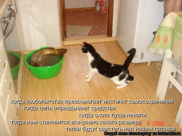 Котоматрица: когда любопытство превозмогает инстинкт самосохранения когда цель оправдывает средства когда охота пуще неволи тогда нам становится все-