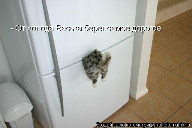 Котоматрица: - От холода Васька берёг самое дорогое
