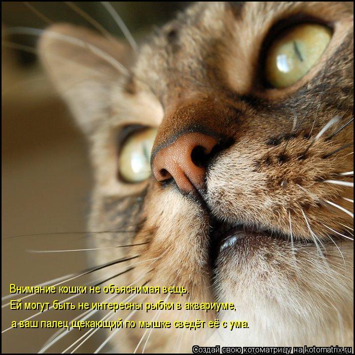 Котоматрица: Внимание кошки не объяснимая вещь. Ей могут быть не интересны рыбки в аквариуме, а ваш палец щекающий по мышке сведёт её с ума.