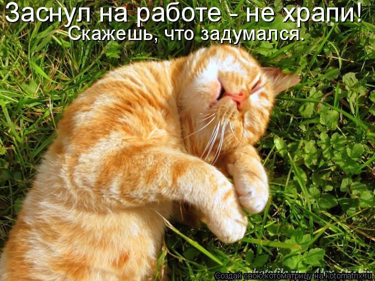 Котоматрица: Заснул на работе - не храпи! Скажешь, что задумался.