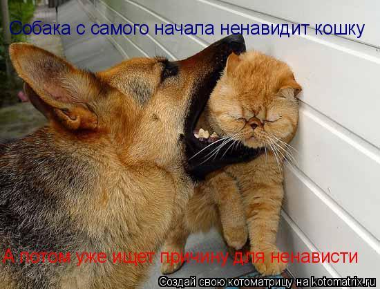Котоматрица: Собака с самого начала ненавидит кошку А потом уже ищет причину для ненависти