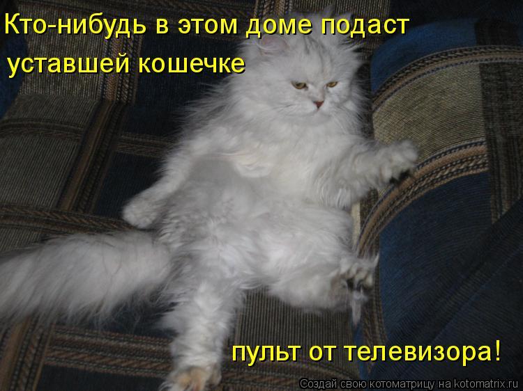 Котоматрица: Кто-нибудь в этом доме подаст уставшей кошечке пульт от телевизора!