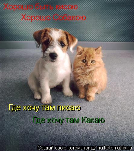 Котоматрица: Хорошо быть кисою Хорошо Собакою Где хочу там писаю Где хочу там Какаю