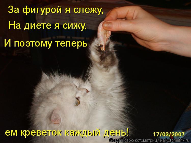 Котоматрица: За фигурой я слежу, На диете я сижу, И поэтому теперь ем креветок каждый день!
