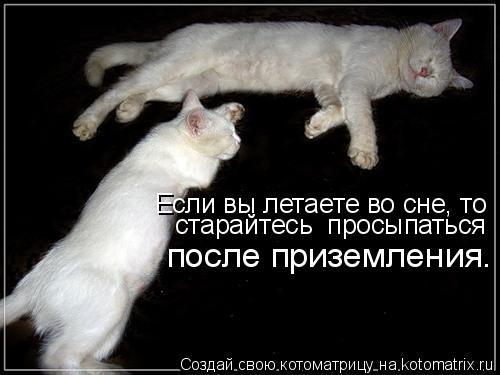 Котоматрица: Если вы летаете во сне, то старайтесь  просыпаться  после приземления.