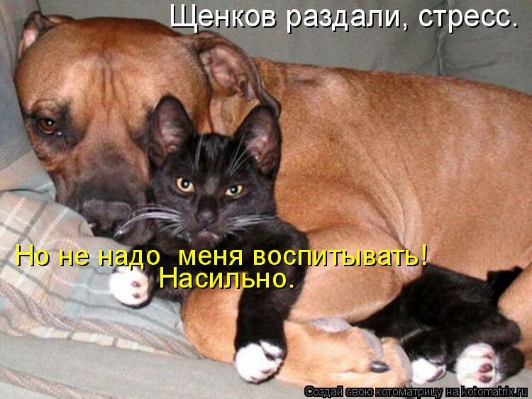 Котоматрица: Щенков раздали, стресс. Но не надо  меня воспитывать! Насильно.