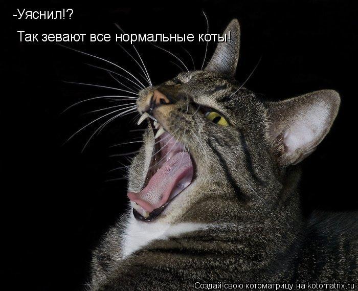 Котоматрица: Так зевают все нормальные коты! -Уяснил!?