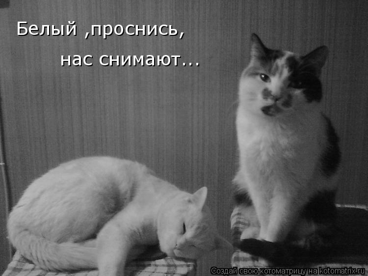 Котоматрица: Белый ,проснись, Белый ,проснись, нас снимают...