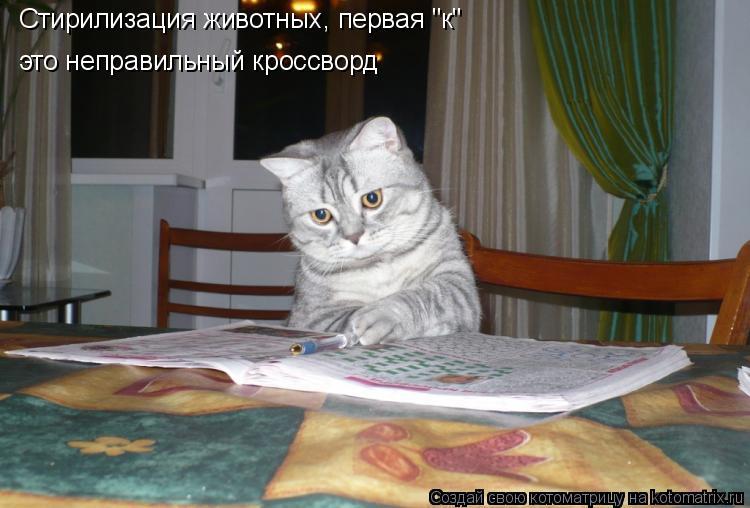 """Котоматрица: Стирилизация животных, первая """"к"""" это неправильный кроссворд"""