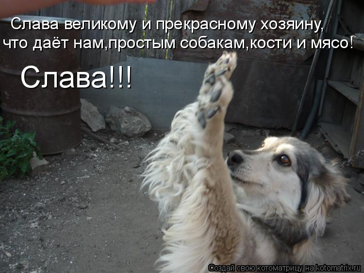 Котоматрица: Слава великому и прекрасному хозяину, что даёт нам,простым собакам,кости и мясо! Слава!!!