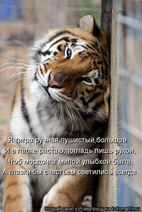 Котоматрица: Я тигра ручная,пушистый,большой И в ласке растаю,погладь лишь рукой, Чтоб мордочка милой улыбкой была,   А глазки бы счастьем светились всег