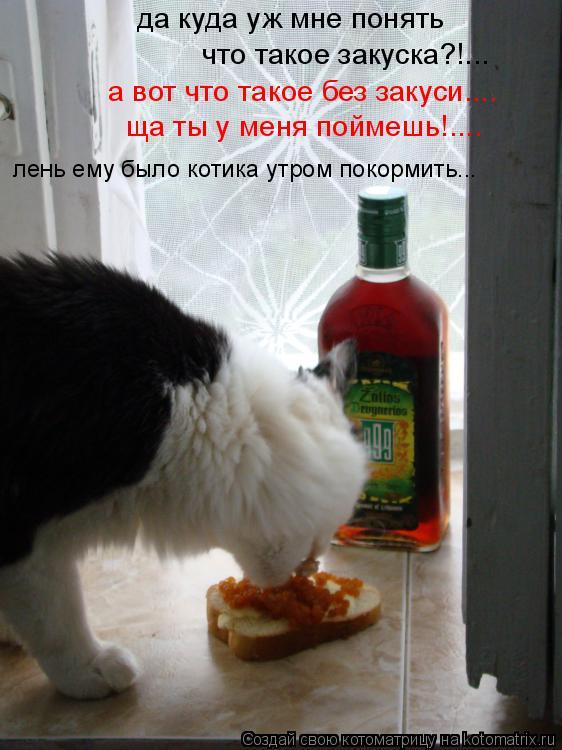 Котоматрица: да куда уж мне понять что такое закуска?!... а вот что такое без закуси.... ща ты у меня поймешь!.... лень ему было котика утром покормить...