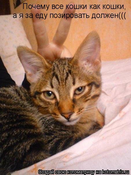 Котоматрица: Почему все кошки как кошки,а я за еду позировать должен((( Почему все кошки как кошки,