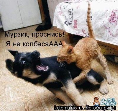 Котоматрица: Мурзик, проснись!  Я не колбасаААА