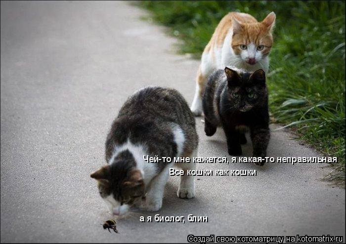 Котоматрица: Чей-то мне кажется, я какая-то неправильная Все кошки как кошки а я биолог, блин