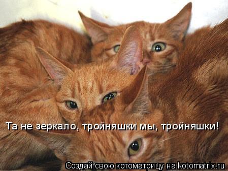 Котоматрица: Та не зеркало, тройняшки мы, тройняшки!