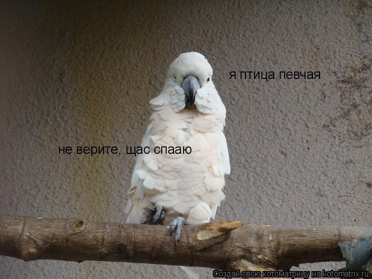 Котоматрица: я птица певчая не верите, щас спааю