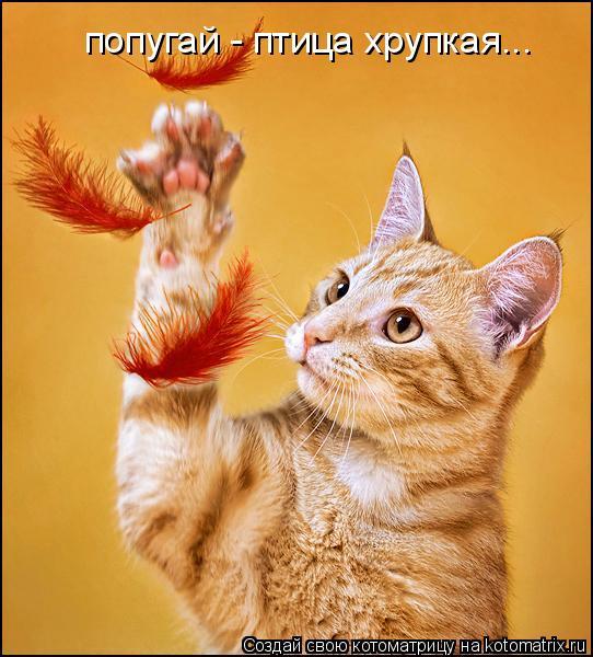 Котоматрица: попугай - птица хрупкая...