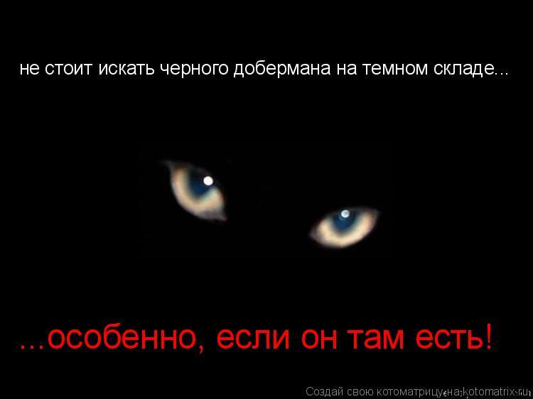 Котоматрица: не стоит искать черного добермана на темном складе... ...особенно, если он там есть!