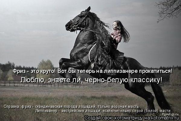 Котоматрица: Фриз - это круто! Вот бы теперь на липпизанере прокатиться! Люблю, знаете ли, черно-белую классику! Справка: фриз - скандинавская порода лошад