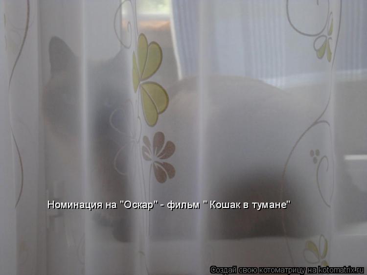 """Котоматрица: Номинация на """"Оскар"""" - фильм """" Кошак в тумане"""""""