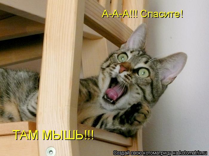 Котоматрица: А-А-А!!! Спасите! ТАМ МЫШЬ!!!