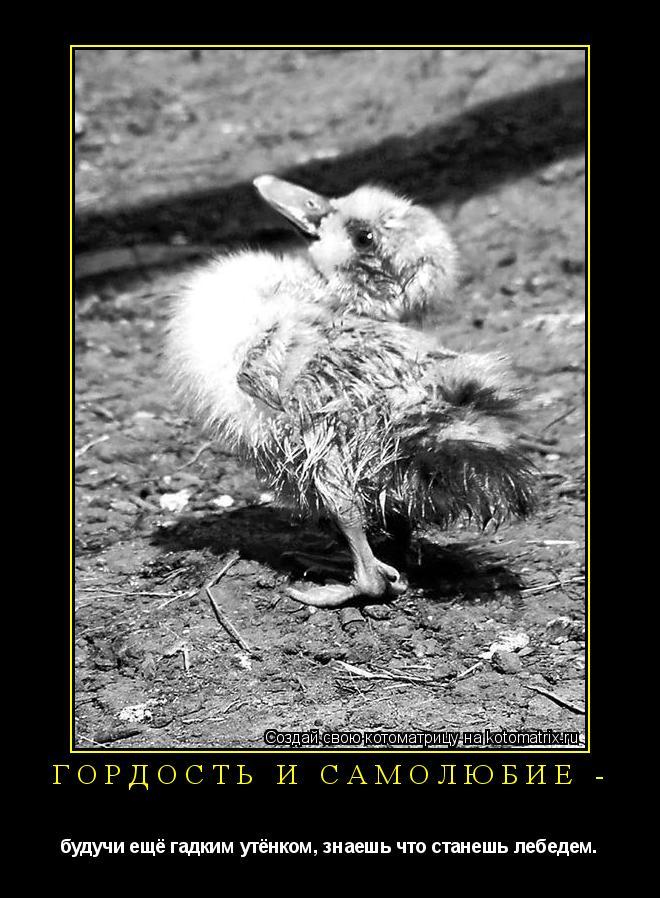 Котоматрица: Гордость и Самолюбие - будучи ещё гадким утёнком, знаешь что станешь лебедем.