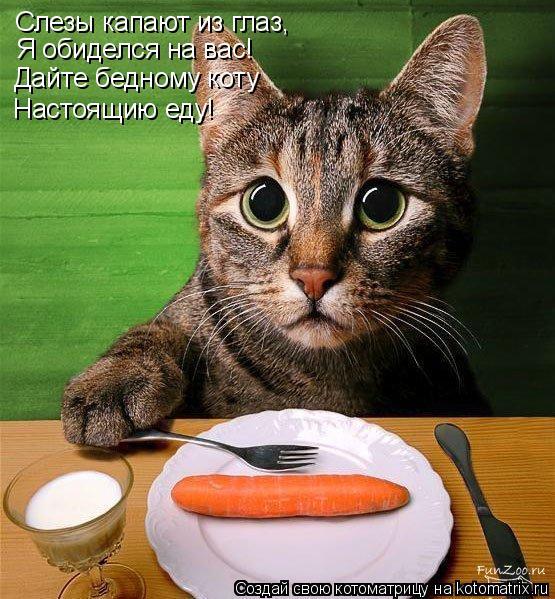 Котоматрица: Слезы капают из глаз, Я обиделся на вас! Дайте бедному коту Настоящию еду!
