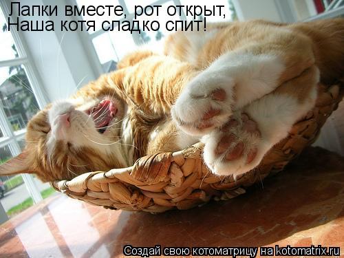 Котоматрица: Лапки вместе, рот открыт, Наша котя сладко спит!